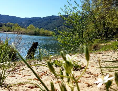 Rivière longeant le camping